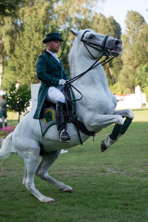 Gran Premio CSIO-W *** 10 agosto 2014 a Bratislava, Slovacchia fotografie stock libere da diritti