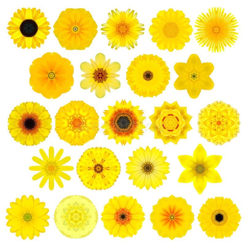 Gran selección de diversa Mandala Flowers Isolated caleidoscópica en blanco fotos de archivo libres de regalías