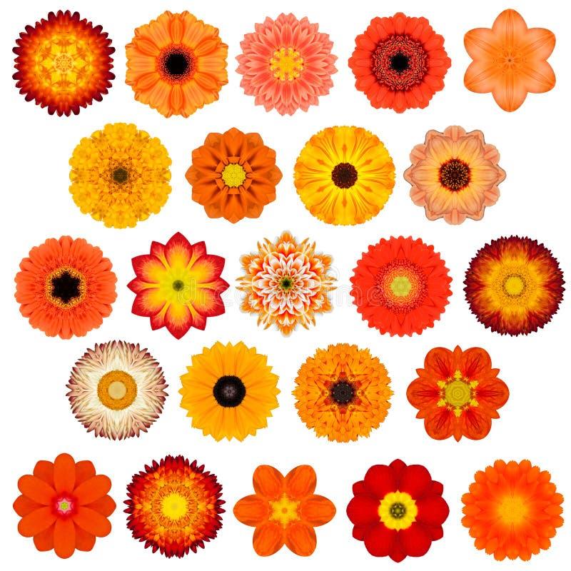 Gran selección de diversa Mandala Flowers Isolated concéntrica en blanco fotografía de archivo