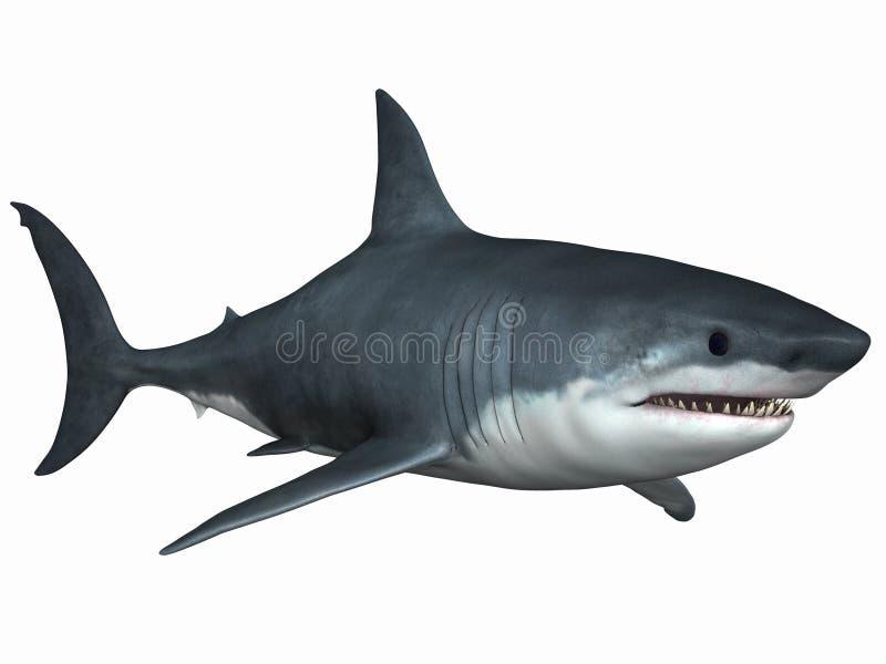 Gran tiburón blanco ilustración del vector