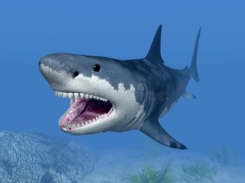 Gran tiburón blanco stock de ilustración