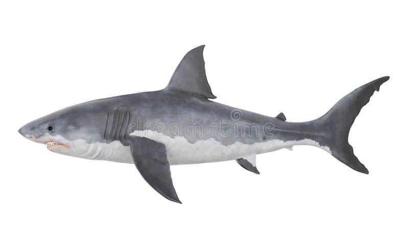 Gran tiburón blanco aislado stock de ilustración