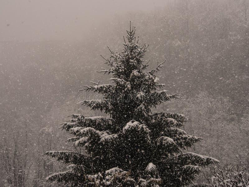 Gran under ett sn?fall fotografering för bildbyråer