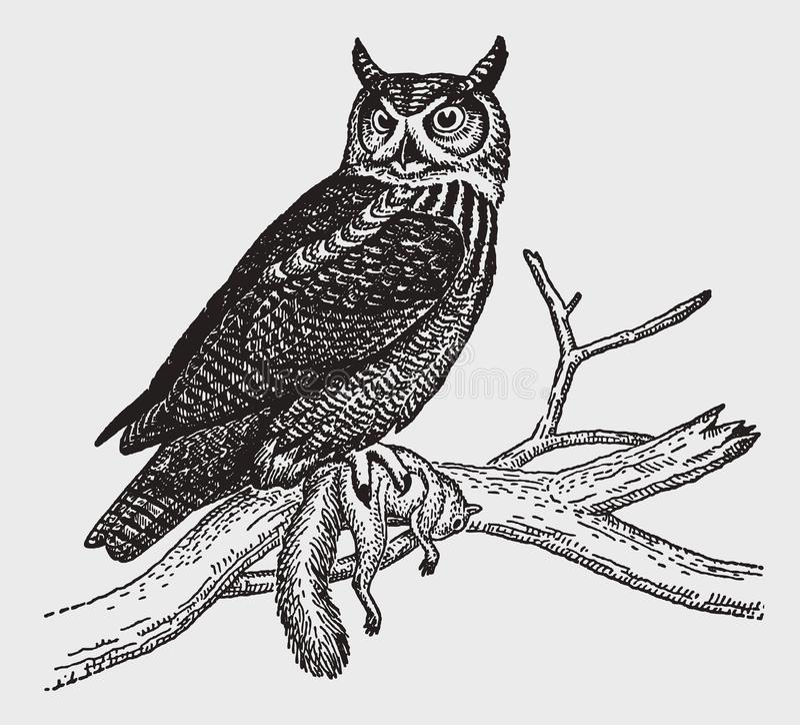 Gran virginianus del bubón del búho de cuernos que se sienta en una rama y que sostiene una ardilla muerta en su garra ilustración del vector