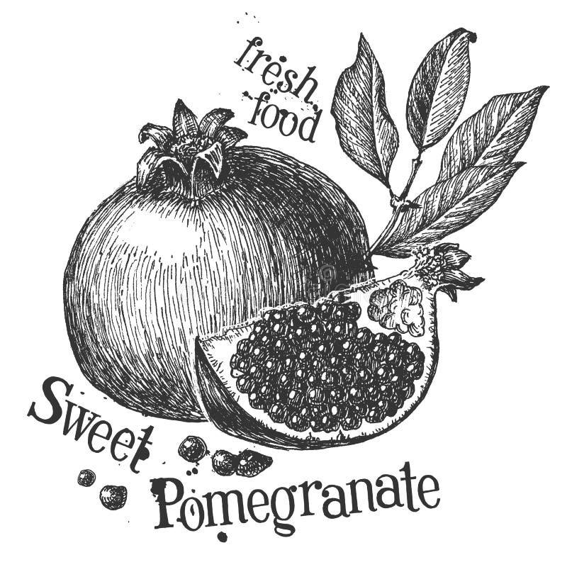 Granaatappel op een witte achtergrond schets stock illustratie