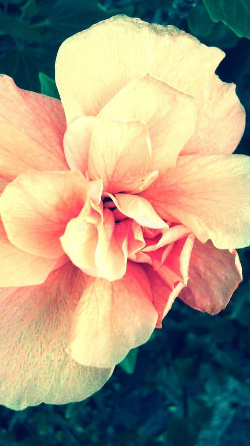 Granaatappelbloemen stock fotografie