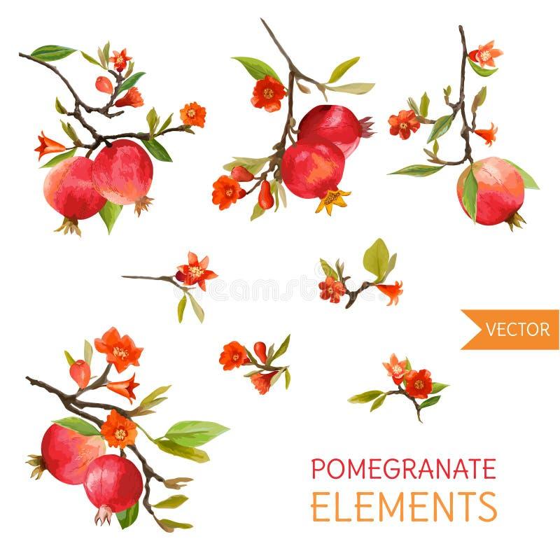 Granadas, flores y hojas del vintage Fruta del estilo de la acuarela ilustración del vector