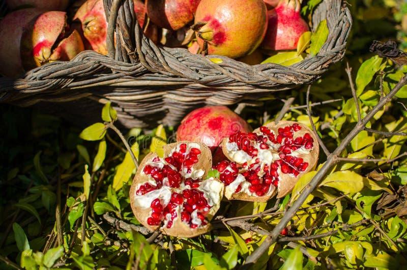 Granadas, fruta de la estación, ricas coloridos en vitaminas y antioxidante; ideal para los ricos de una cocina en menús y feliz  foto de archivo libre de regalías