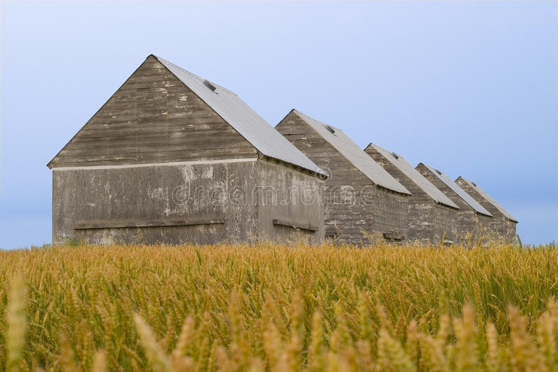 Granai nel campo del raccolto fotografia stock