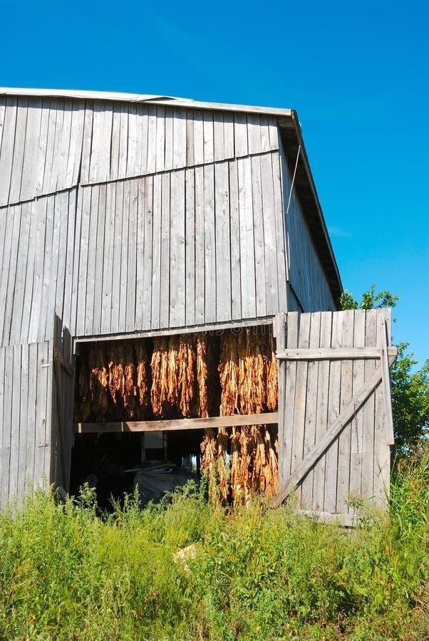Granaio del tabacco nel Kentucky S.U.A. fotografia stock libera da diritti
