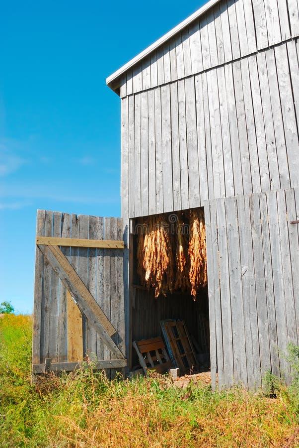 Granaio del tabacco nel Kentucky S.U.A. fotografie stock