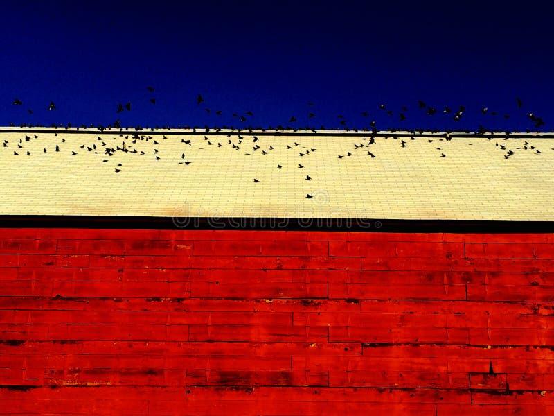 Granaio della Nuova Inghilterra con gli uccelli fotografia stock
