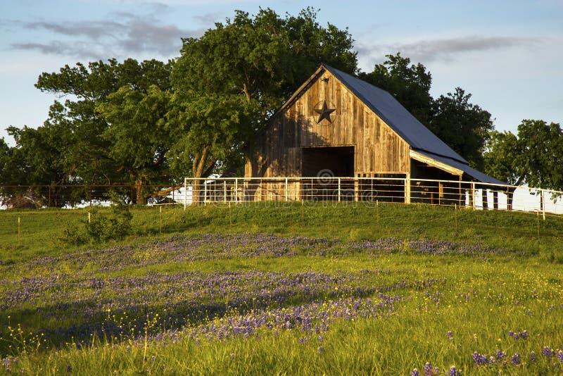 Granaio di legno sulla traccia del Bluebonnet vicino a Ennis, il Texas fotografie stock libere da diritti