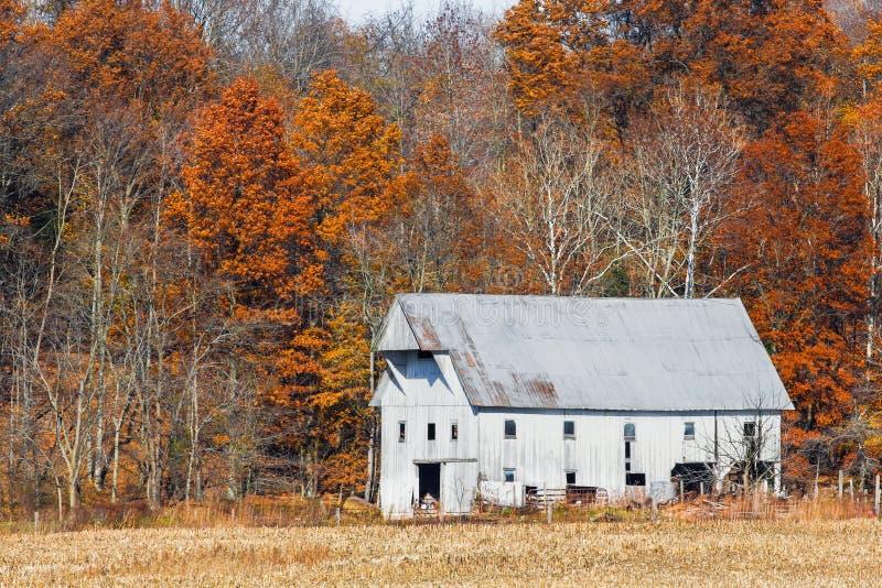 Granaio e Autumn Leaves bianchi fotografie stock libere da diritti