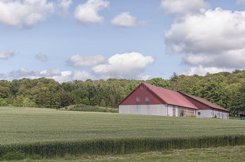 Download Granaio E Campo Dell'azienda Agricola Fotografia Stock - Immagine di grano, granaio: 56884900