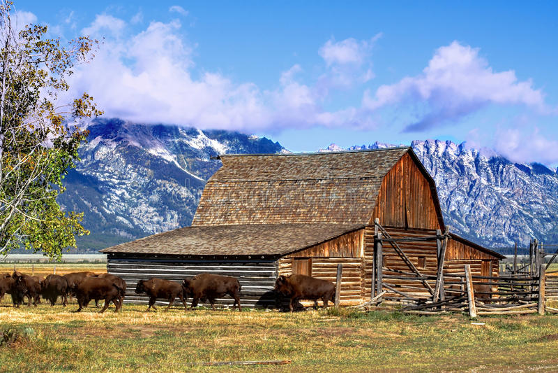 Granaio mormonico di riga nel grande Tetons immagini stock