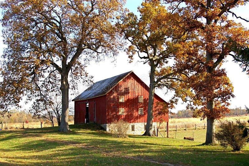 Granaio rosso ed alberi alti di caduta immagine stock