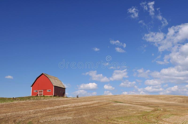 Granaio rosso nel campo del terreno coltivabile di Palouse immagine stock