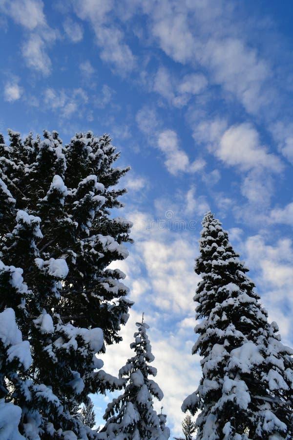 Granar för blå himmel och vinteri de Ural bergen, Ryssland, Chelyabinsk region, Minyar Tal fe för Pushkin ` s fotografering för bildbyråer