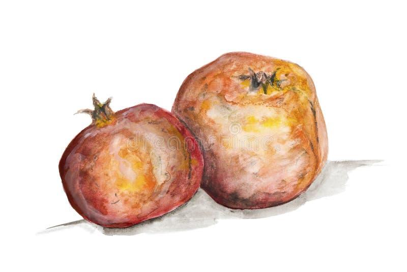 Granatapfel trägt Konzept Früchte vektor abbildung