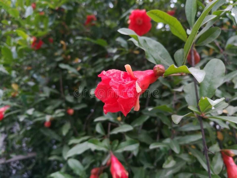 Granatowa drzewa kwiaty zdjęcie royalty free
