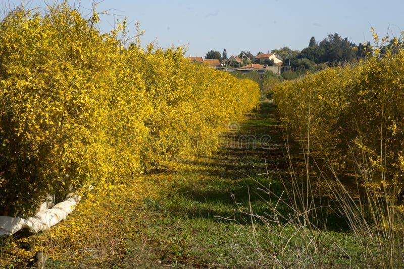 Granatowa sad w spadku obrazy stock