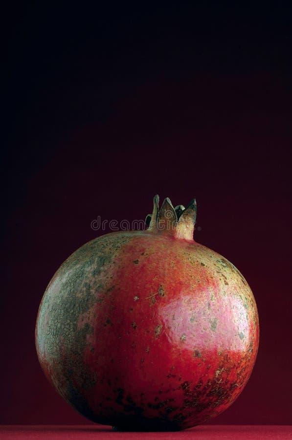 granatowiec zdjęcia stock