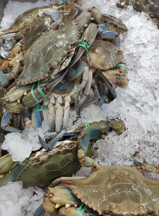 Granchi blu visualizzati nel contatore dei pesci fotografia stock libera da diritti