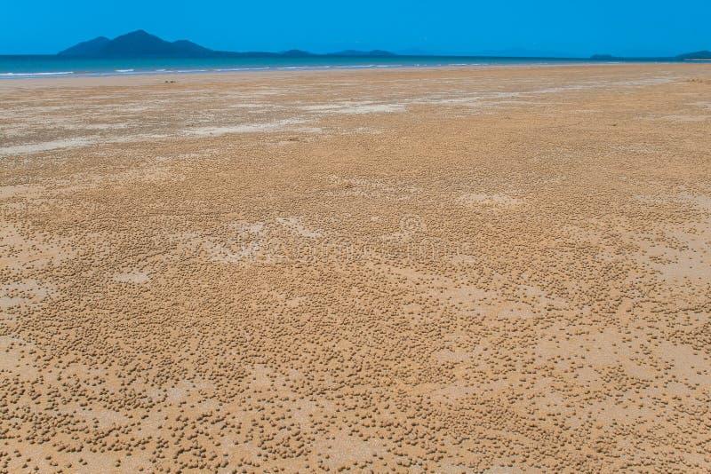 Granchi delle sfere della sabbia di migliaia della spiaggia piccoli immagini stock