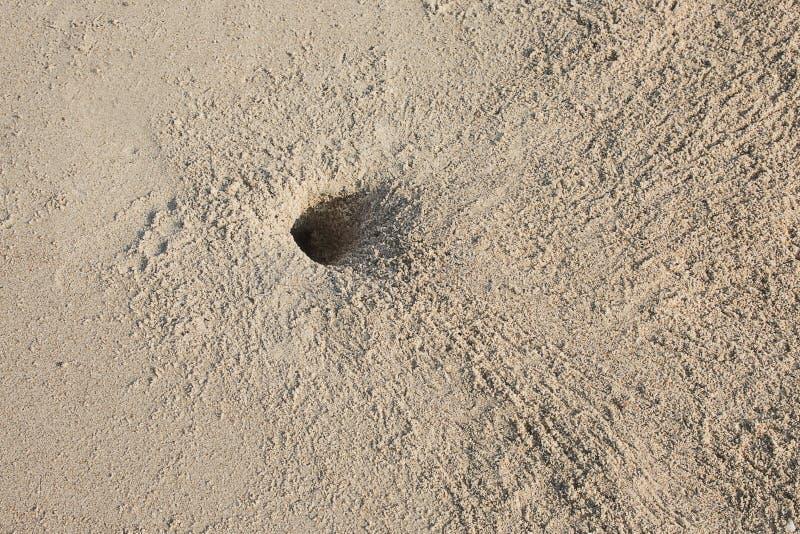 Granchi e molte orme sulla spiaggia fotografia stock libera da diritti