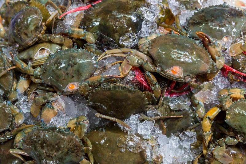 Granchi freschi nel mercato dei frutti di mare filo dell'artropodo concetto dell'artiglio e dell'armatura Granchio fresco del mar fotografia stock libera da diritti