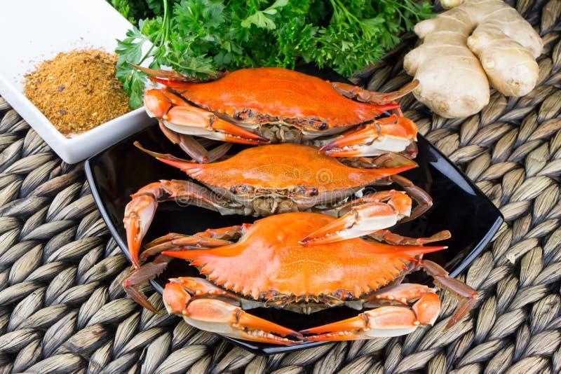 Granchi nuotatori cotti a vapore caldi con lo zenzero Granchi di Maryland Cucinato e pronto da mangiare fotografia stock libera da diritti