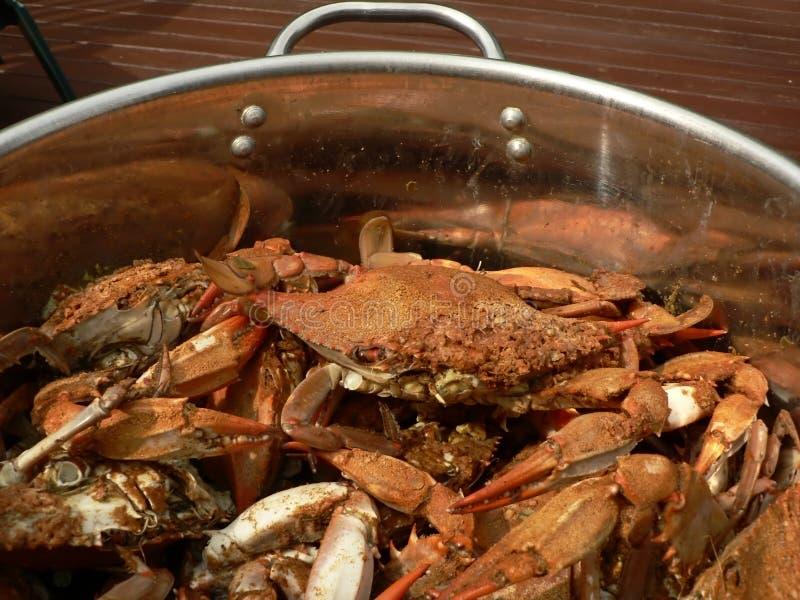 Granchio - granchi nuotatori cucinati 9 fotografia stock libera da diritti