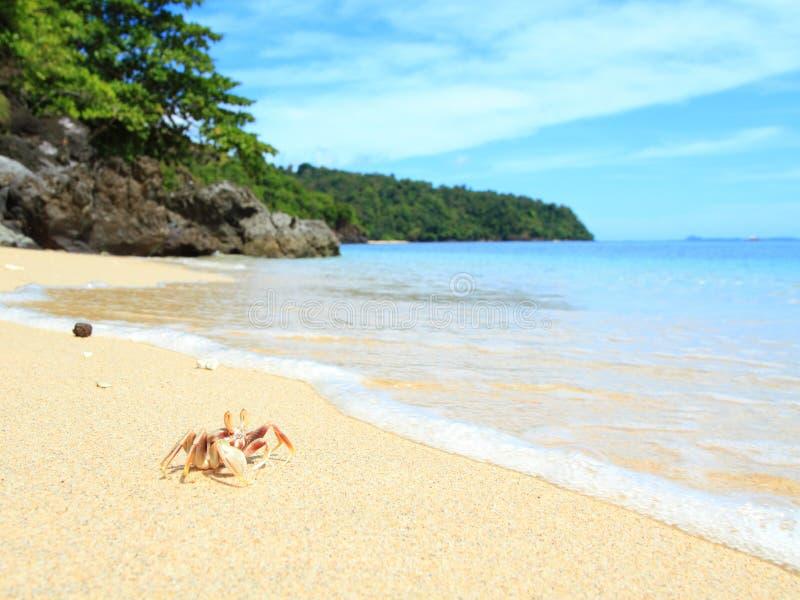 Granchio Landcape sulla spiaggia tropicale, Sulawesi immagine stock libera da diritti