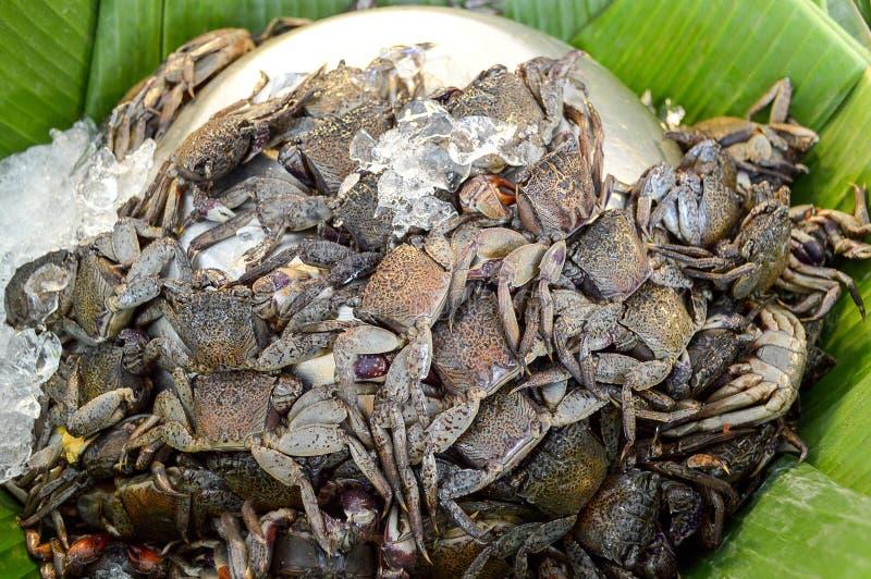 Granchio salato del riso fotografie stock libere da diritti