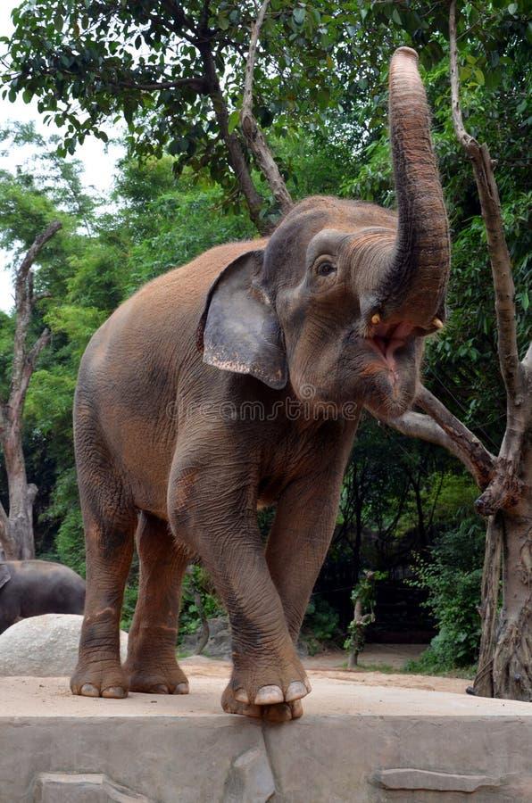 Grand éléphant photo libre de droits