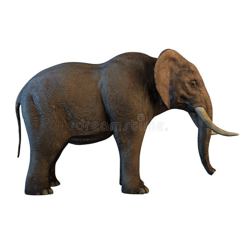 Grand éléphant africain d'isolement sur l'illustration blanche du fond 3d image libre de droits