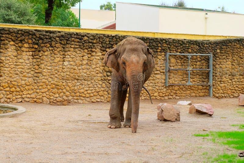 Grand éléphant dans le zoo photo libre de droits