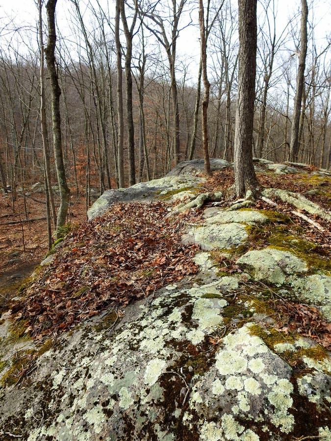 Grand affleurement en pierre décoré de divers lichens et mousses image stock