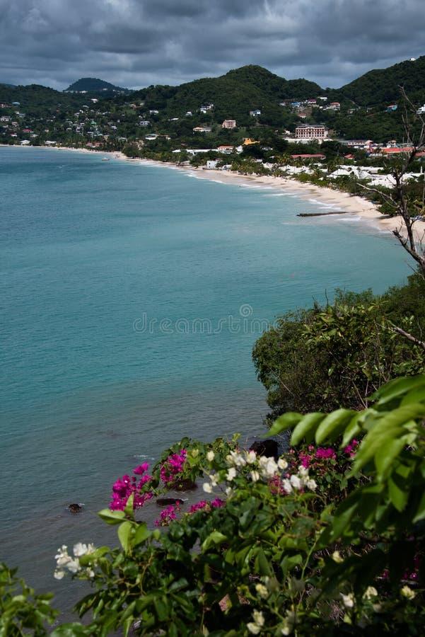Grand Anse garden 2 royalty free stock photography