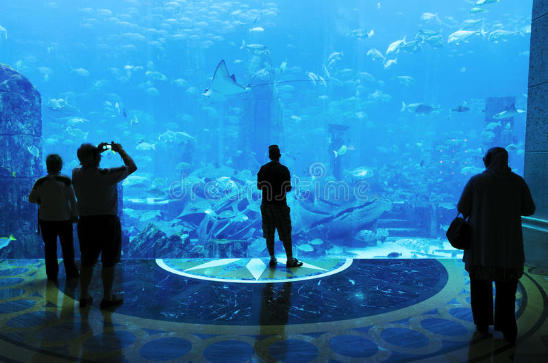 Grand aquarium photographie stock