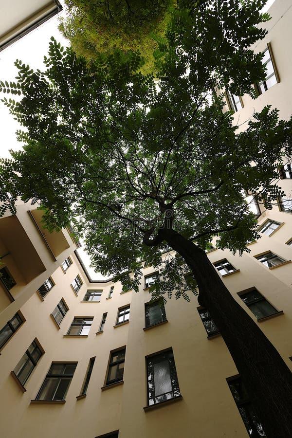 Grand arbre à l'intérieur d'une cour de Berlin image libre de droits