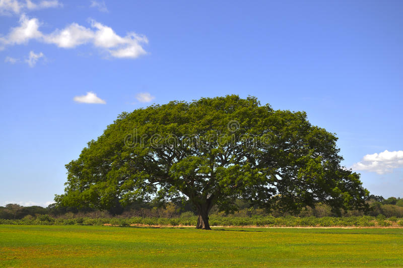 Grand arbre images stock