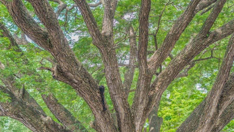 Grand arbre images libres de droits