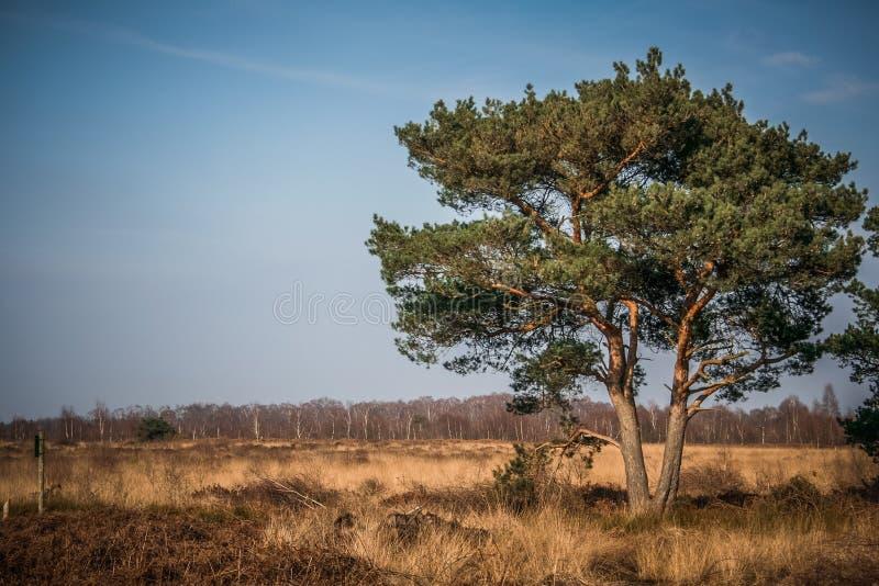 Grand arbre au soleil image libre de droits