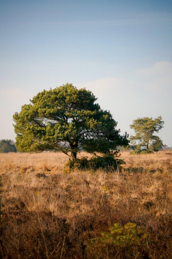 Grand arbre au soleil photo stock