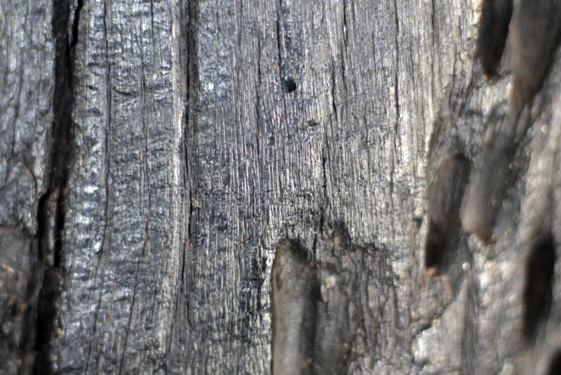 Grand arbre avec le beau modèle photo libre de droits