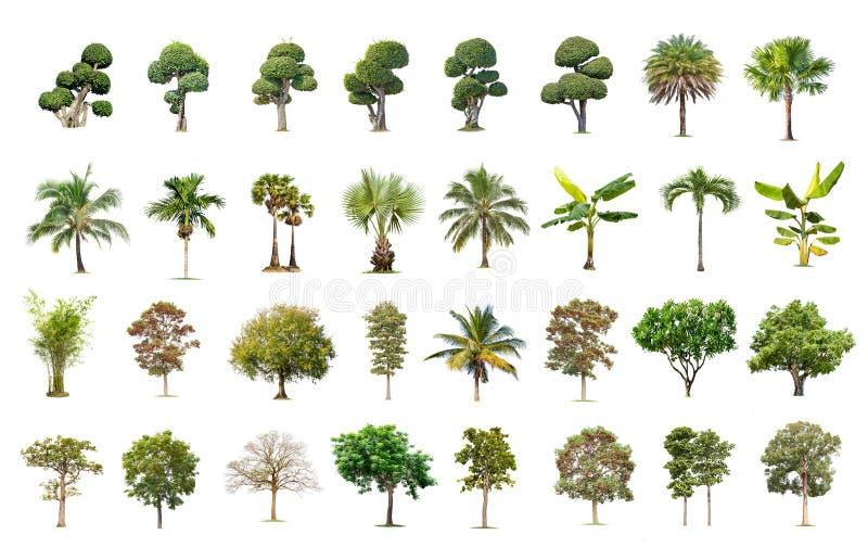 Grand arbre d'isolement sur le fond blanc, la collection d'arbres photographie stock libre de droits