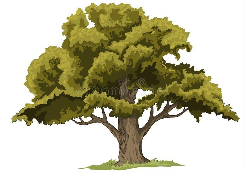 Grand arbre de chêne illustration de vecteur