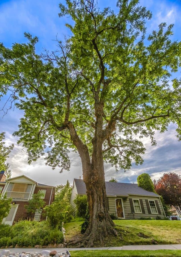 Grand arbre en dehors de maison à Salt Lake images libres de droits